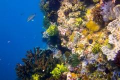 Indonesien, Komodo, Tauchen-2
