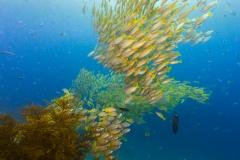 Pulau Pef, Raja Ampat-24