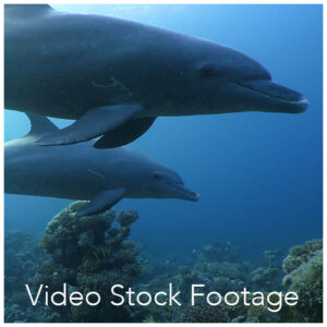 Video Stock Footage